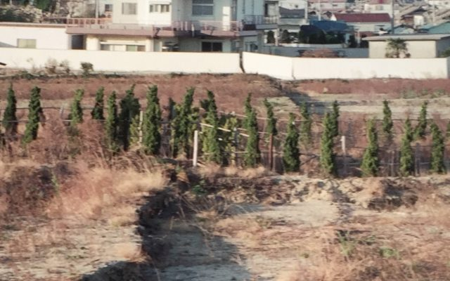 """""""断層を見る!"""" 野島断層が保存されている北淡震災記念公園…"""